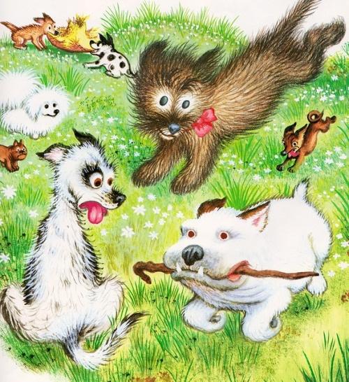 Running Mr. Dog